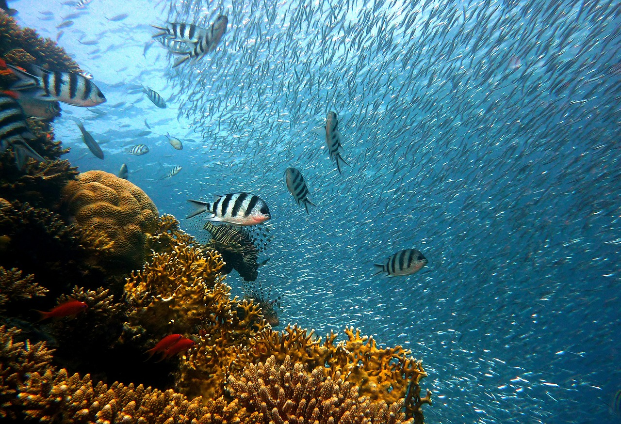 coral reef fish marine life underwater reef safe sunscreen non toxic all natural ecofriendly ethical conscious sustainable