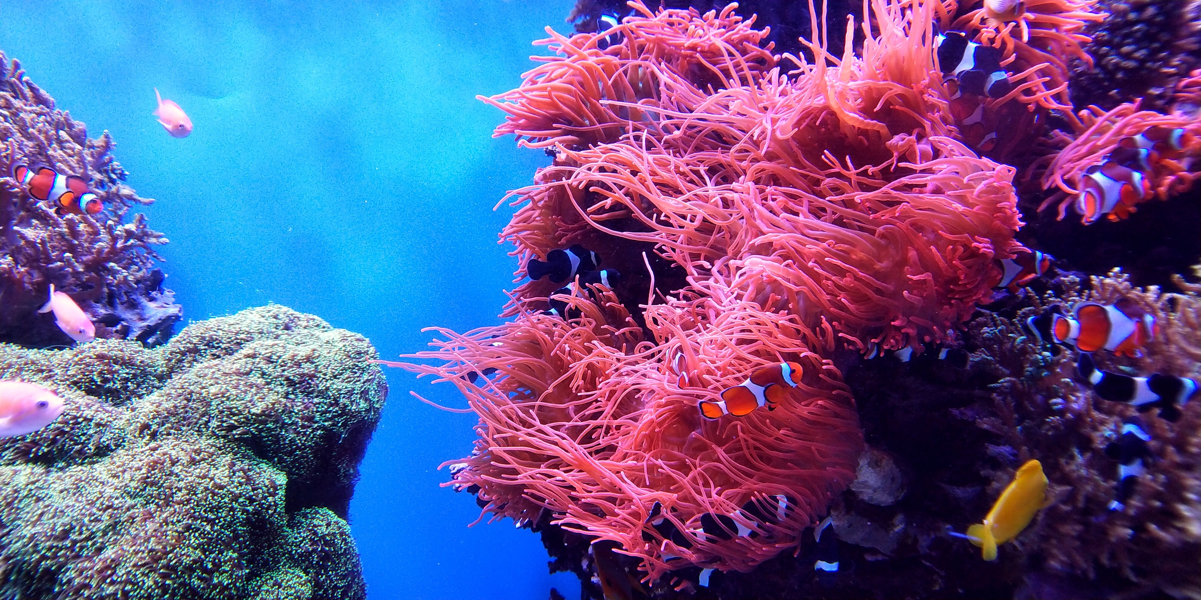 coral reef world reef day raw elements protect environment ocean sea marine life